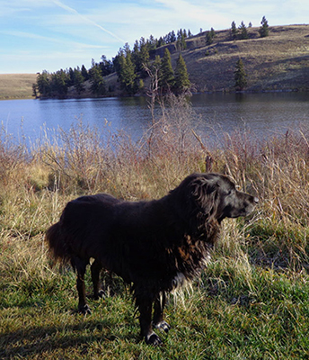 Susan Buis's dog, Raven, at Edith Lake.