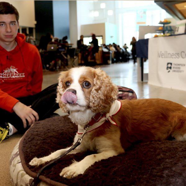 St. John Ambulance therapy dog