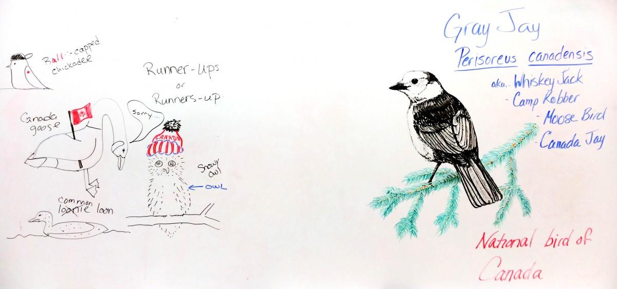 Singing The Praises Of National Bird Tru Newsroom