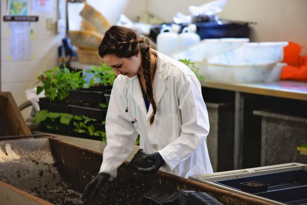 Amelia Galuska working with soil at Agri-Food Canada in Summerland, B.C