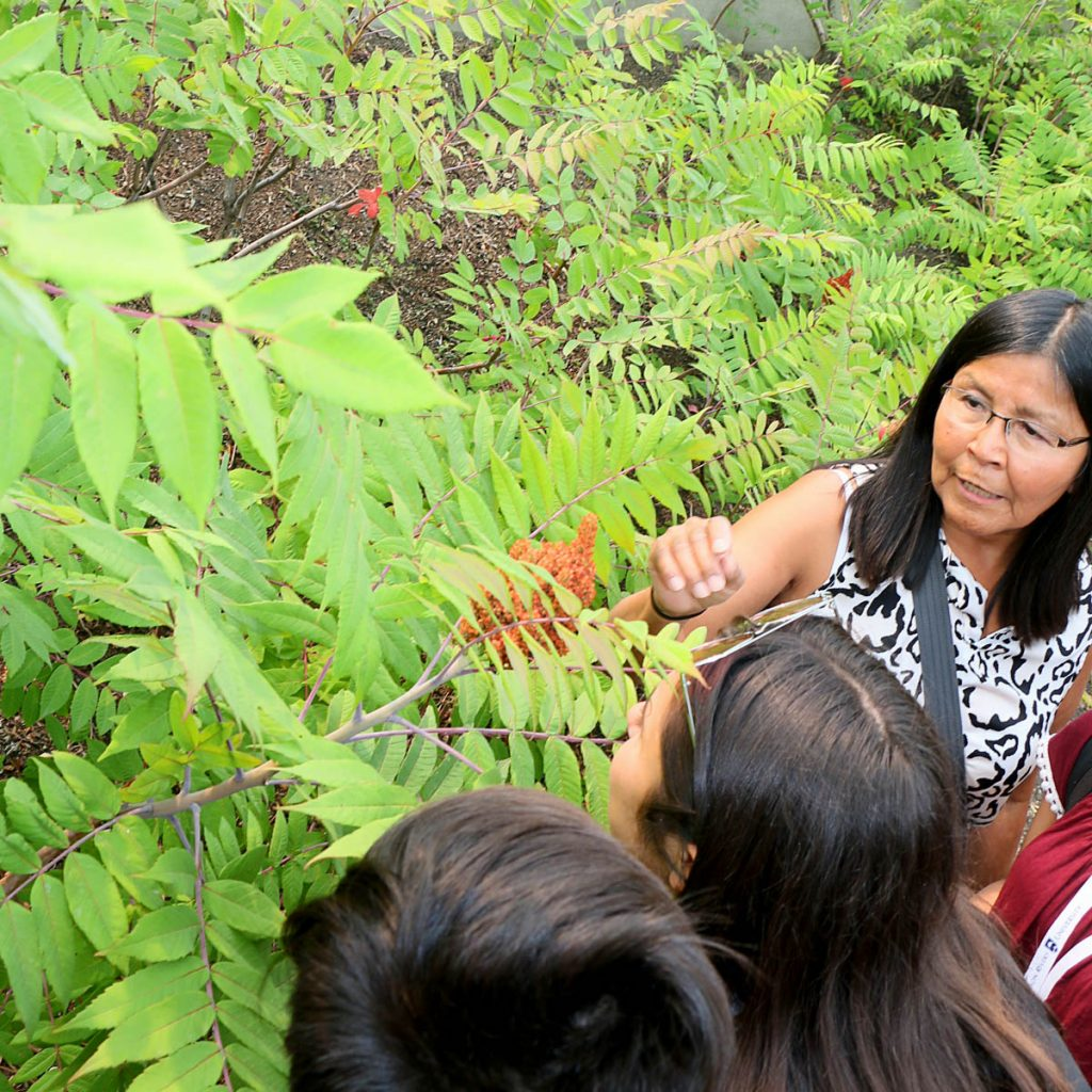 Indigenous science and health science camp: traditional plants
