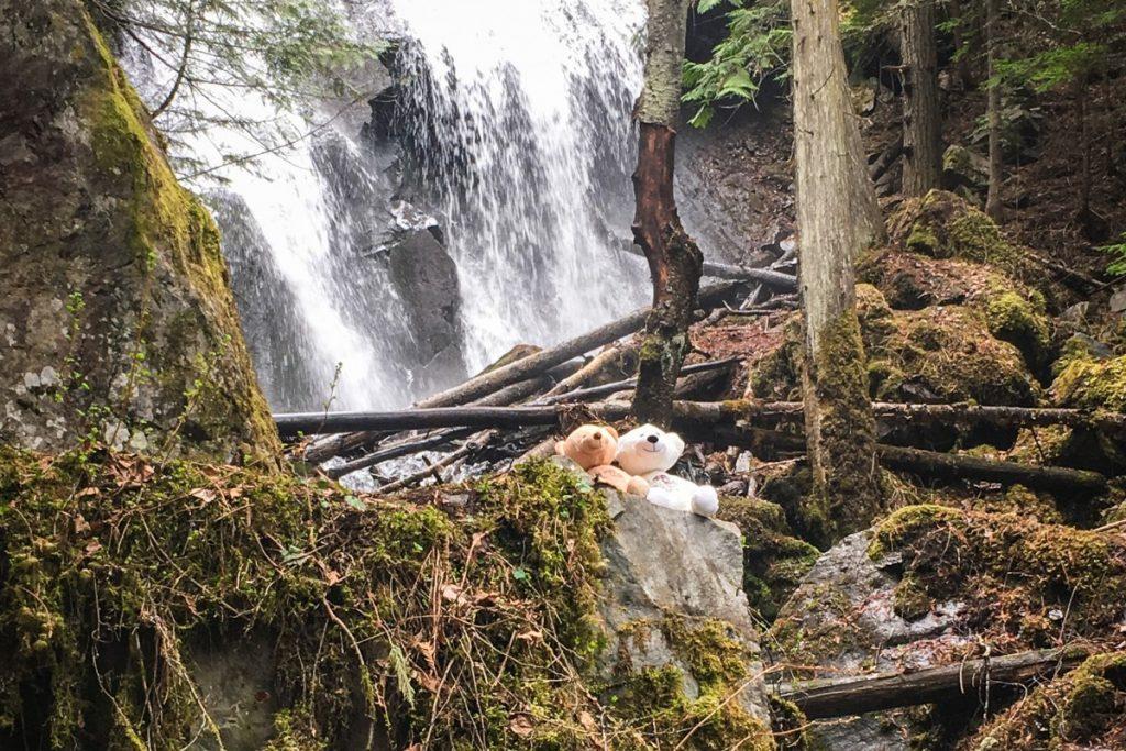 Spirit Bears at Hazelton waterfall