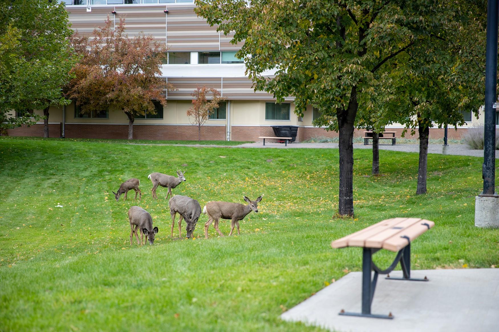 deer on campus