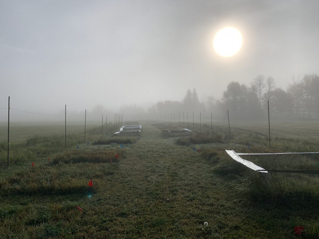Cutting Through the Fog by Sarah Bayliff: The rising sun burns through the early morning fog above a TRU agricultural research site.